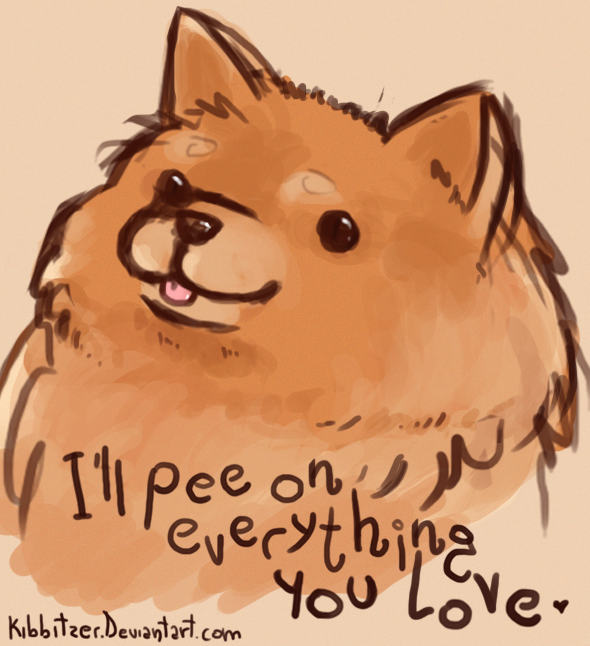 Pomeranian Dog Pees In The House Then Starts Digging