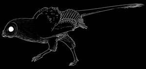 Owl Eosinopteryx by StygimolochSpinifer
