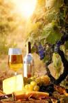 Vineyard Luncheon