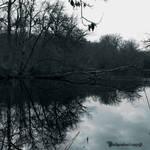 REFLECTION III