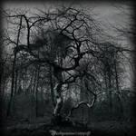 Tortured tree III