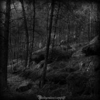 The forest II by CountessBloody