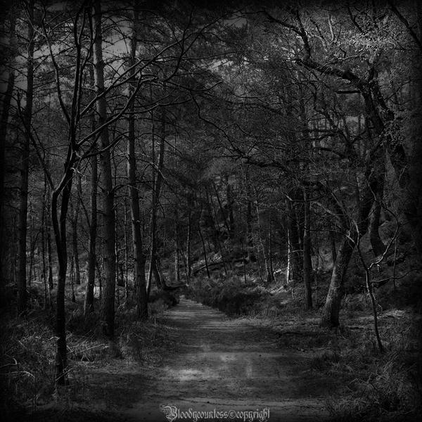 The forest V by CountessBloody