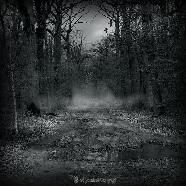In the dark forest , new serie by CountessBloody