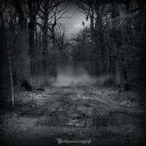 In the dark forest , new serie