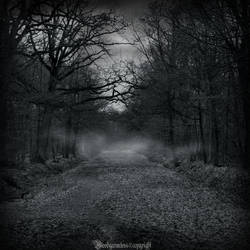 In the dark forest new serie 2