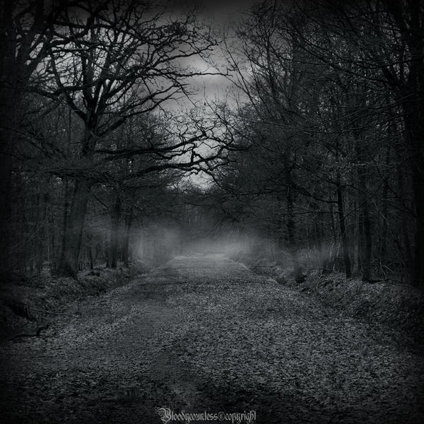 http://img03.deviantart.net/087b/i/2011/097/6/3/in_the_dark_forest_new_serie_2_by_countessbloody-d3devhy.jpg