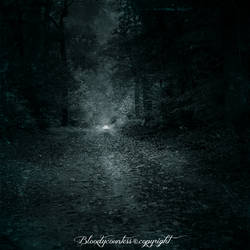 Lost in forest II