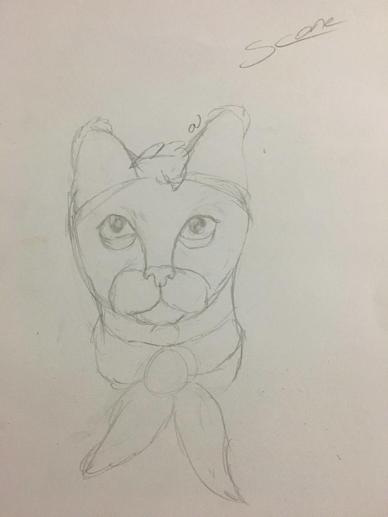 Starling Sketch  by SconeSCM
