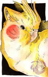 Cockatiel sketch by Idlewings