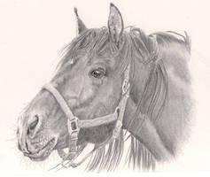 A5 Horse Portrait by Bronco-Illustration