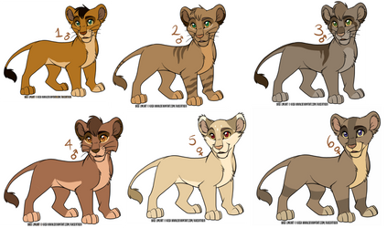 lion cubs for adopt open