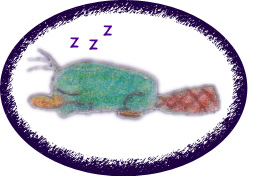 Itty Bitty Perry ZZZZZZZZZZZZZZZZZZZZZZZZZZZZZZZZZ by AgentBengalTiger