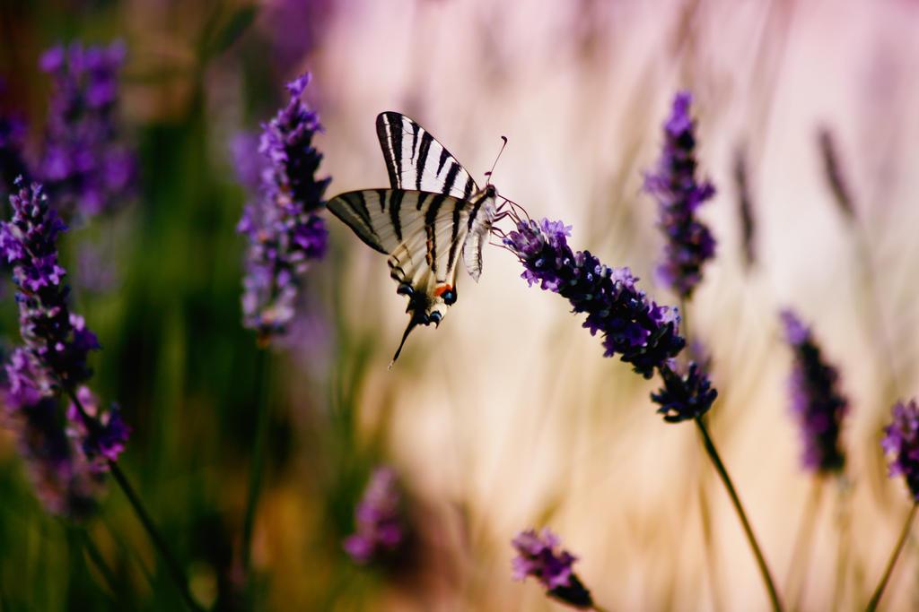 Swallowtail by Branchewski