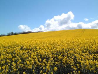 Yellow Fields of Kilve by Halveron