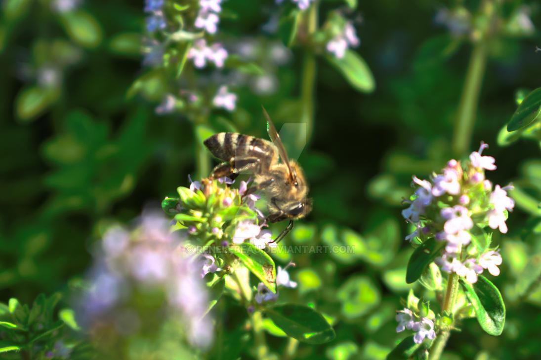 Bee by ReneLeBeau