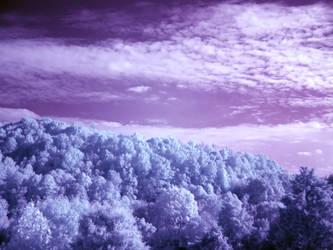 Purple Haze by Wanderer85