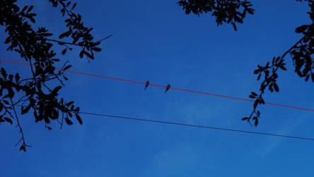 Love Birds on a Red Thread