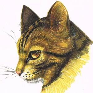 Midniterain's Profile Picture