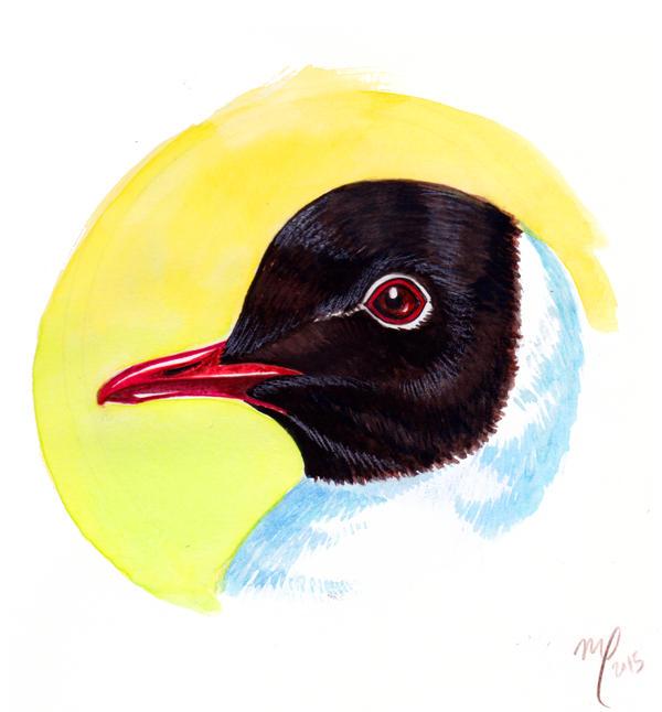 Black-headed Seagull by Midniterain