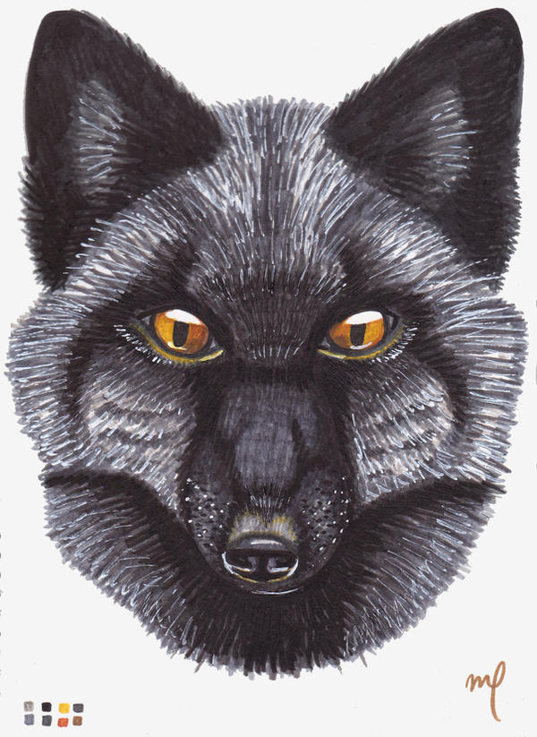 Silver Fox by Midniterain