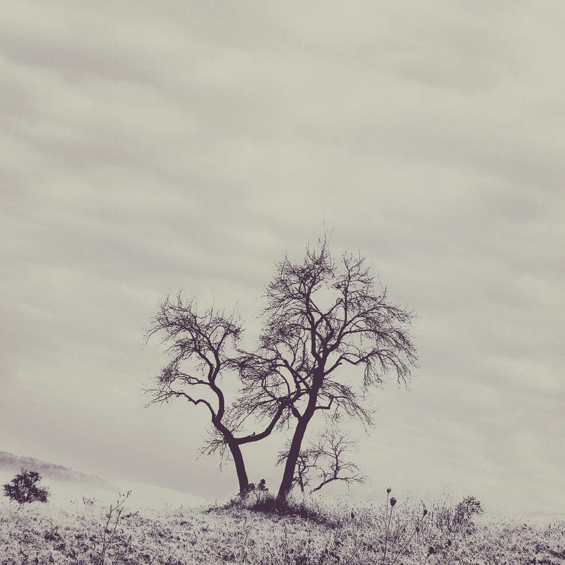 Landscape0005 - Wintertree by Toomi5