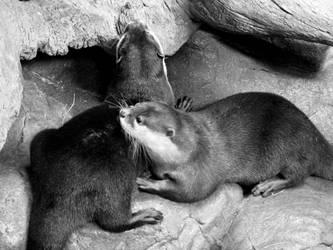 Ottery Cuddles by nozominosetsuna