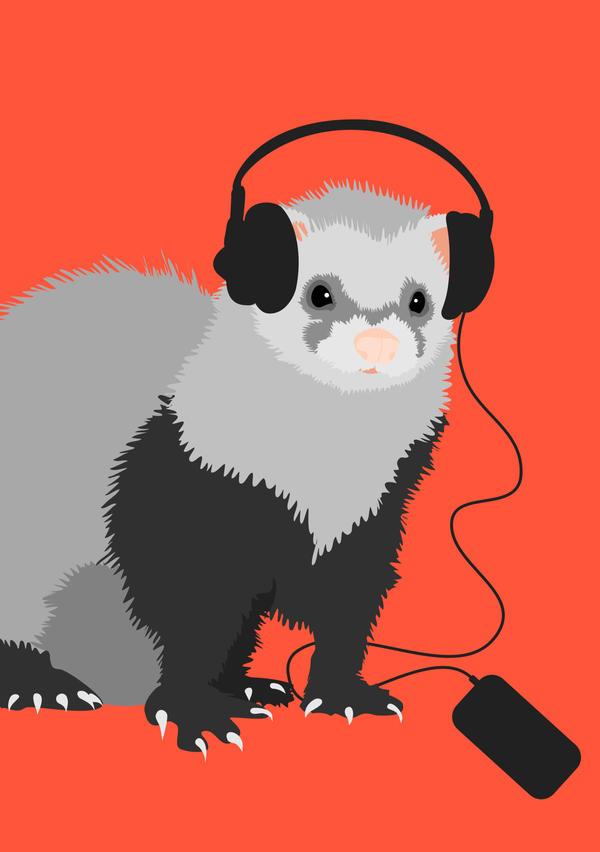 Music Loving Ferret by azzza