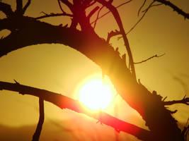 Sunrise Through Twiggs by CherryIda
