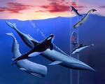 Oceanarium: Sea Mammals