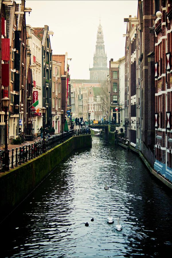 Amsterdam swans by Krapivka2007