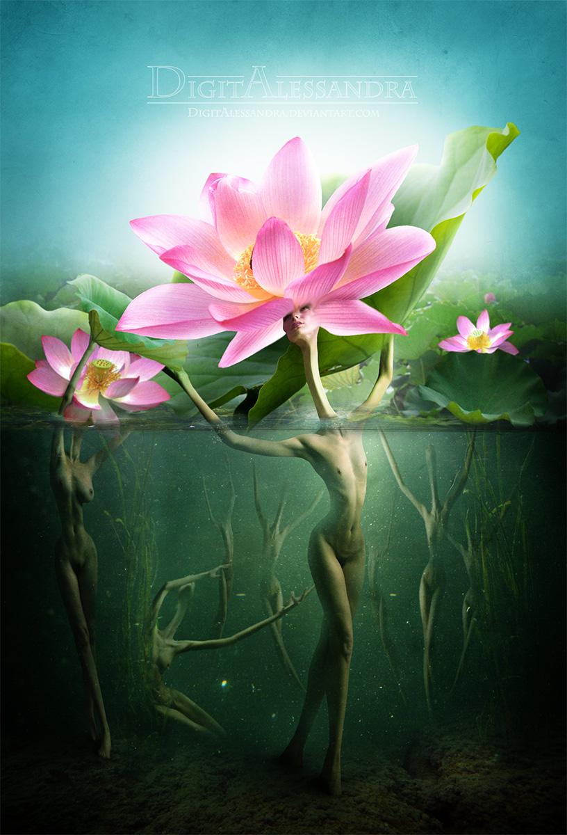 Lotus By Digitalessandra On Deviantart