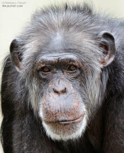 randallfinley's Profile Picture