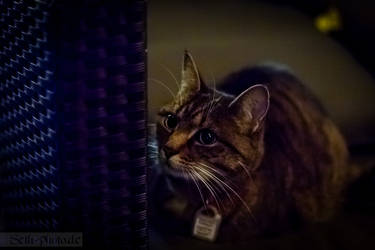 Cats at night aren't always grey by Seth-T