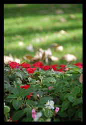 Rojo sobre verde by Curri-chan