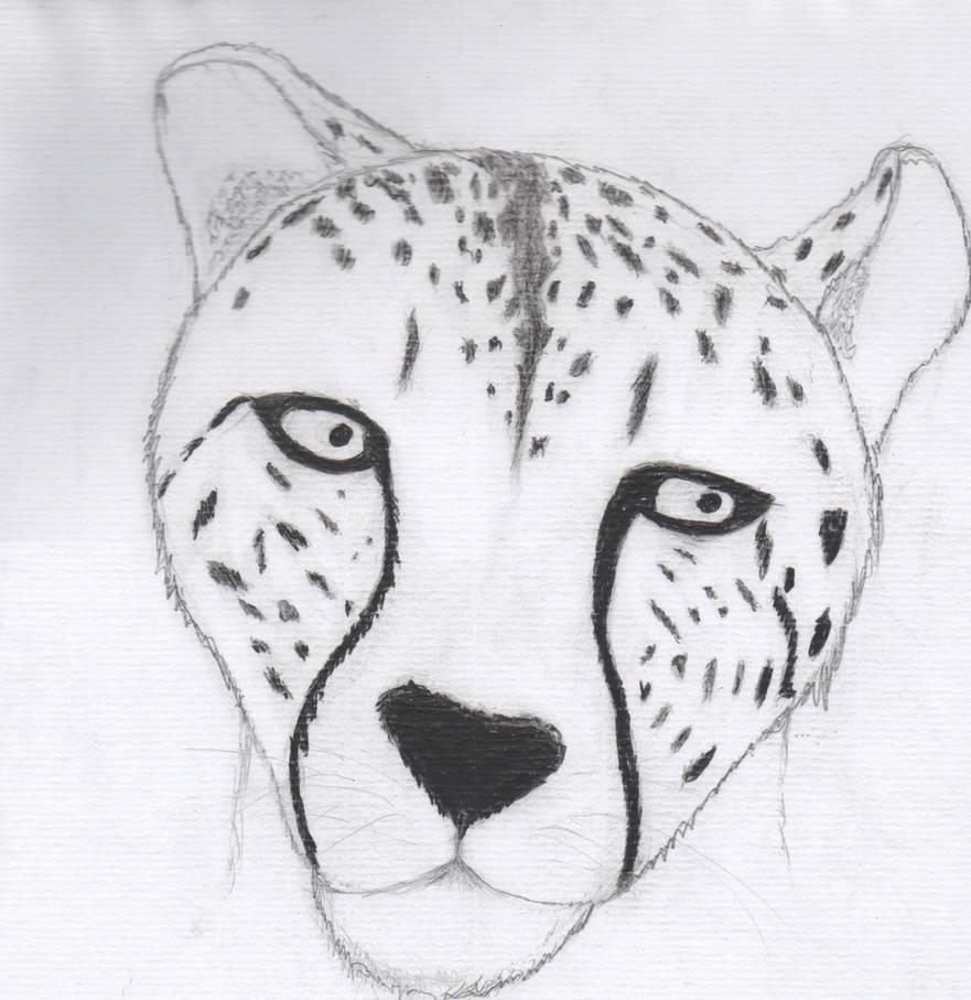 Cheetah S Face Drawing By Yakeman123 On Deviantart