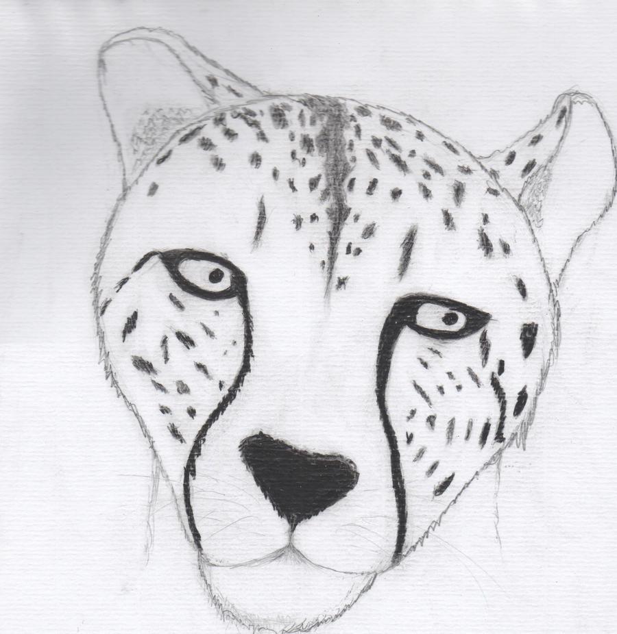 Easy Cheetah Face Drawing