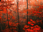 bloody forest