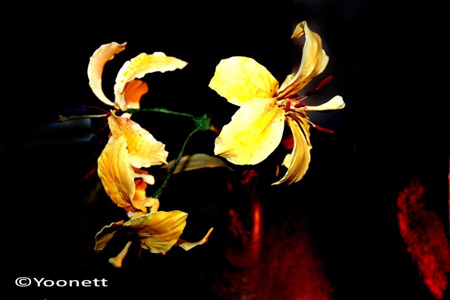 Three Yellow Lilies by Yoonett