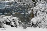 snowscape by Yoonett