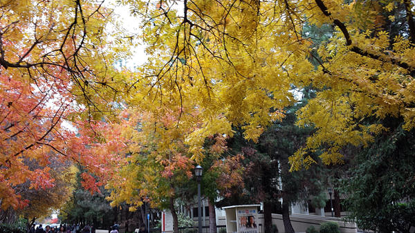 Fall on Campus by AuraWolf87