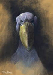The Great Shoebill Stork by danfs85