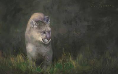 Puma by danfs85