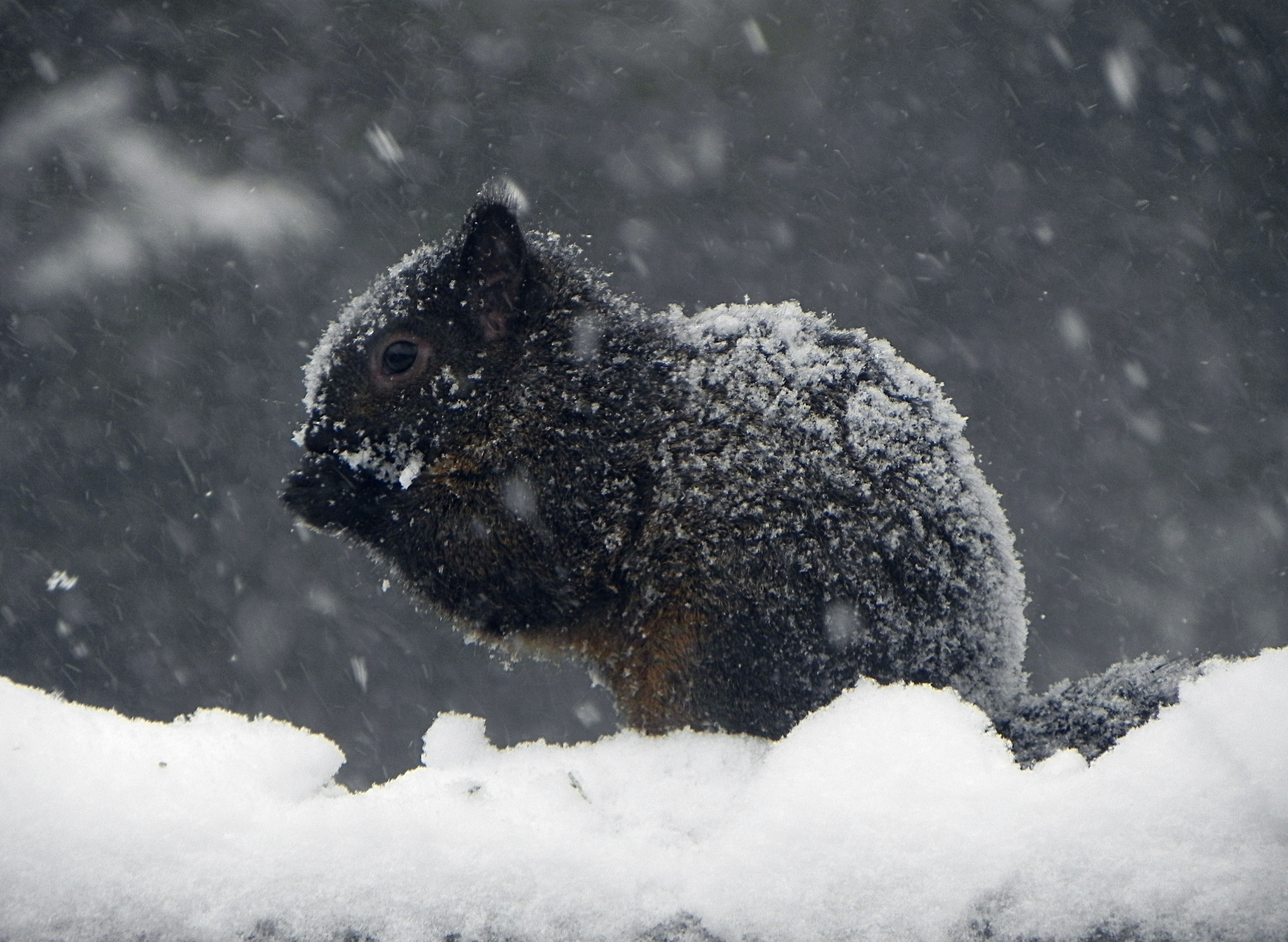 our first snowstorm this winter by Lou-in-Canada