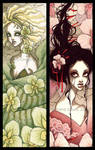 Orchids Bookmarks