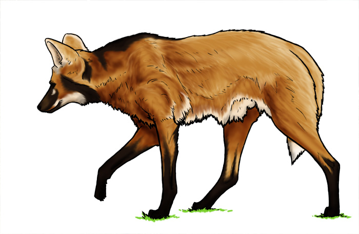Maned Wolf By Daidaishar On DeviantArt