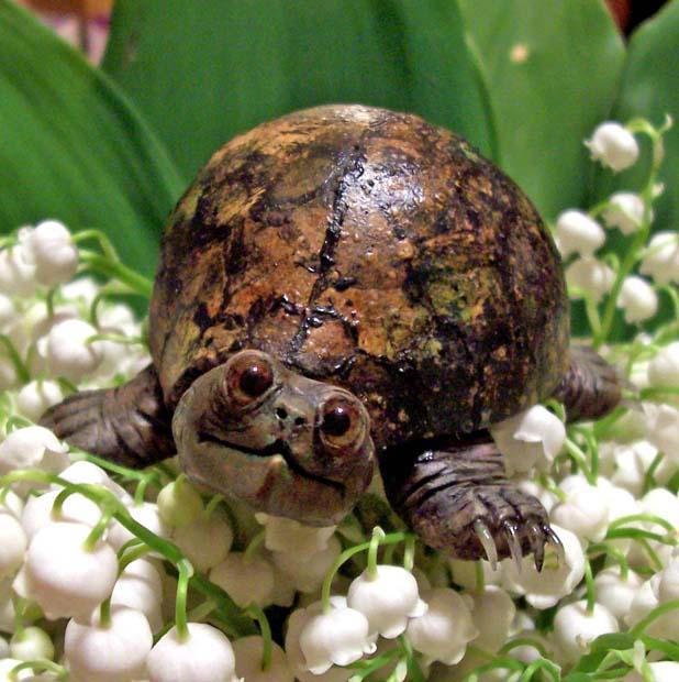 Bug, The Tortoise by cermaith