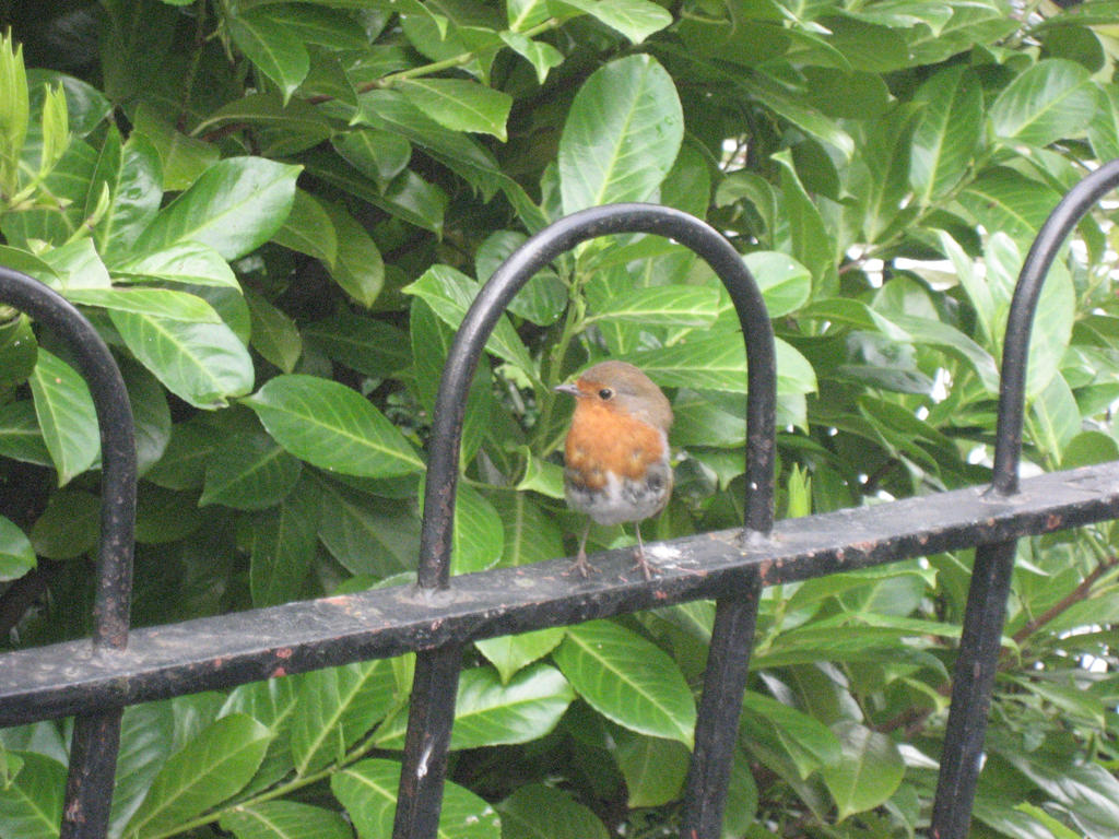 Caged Bird by maitelivingdeadsoul