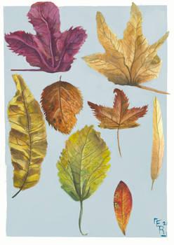 Autumn Leaves: Round 2