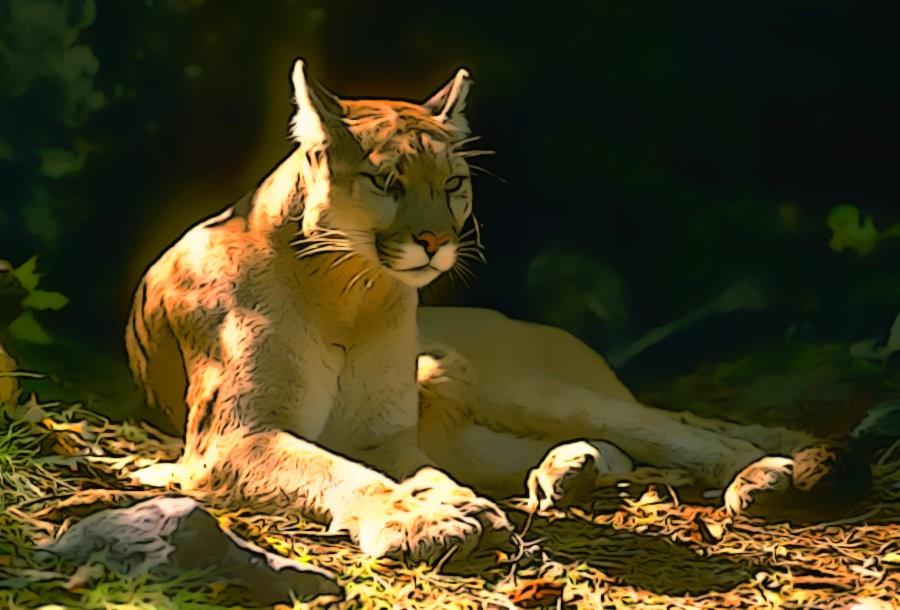California Mountain Lion by PrincessJ420